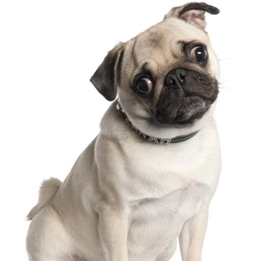 パグ犬の壁紙 個人化 LOGO-玩APPs