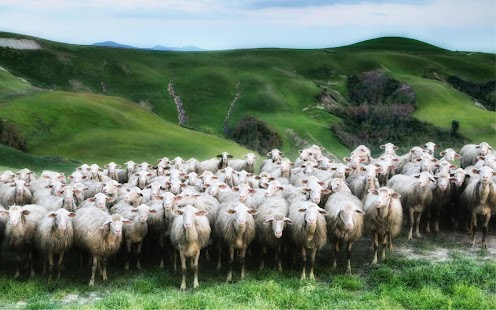 Sheep Wallpaper Screenshot Thumbnail