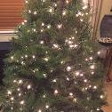 "Douglas Fir/""Christmas Tree""/Oregon Pine/Douglas Spruce"