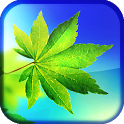 Leaf Live Wallpaper icon