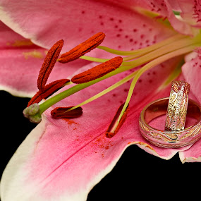 wedding rings by Sorin Lazar Photography - Artistic Objects Jewelry ( arrangement, rings, wedding rings, gold, flower )