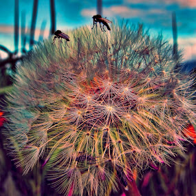 Two flies. by Konrad Ragnarsson - Digital Art Places ( plant, nature, konni27, flower, flies )