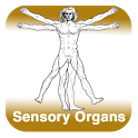 Anatomy - Sensory Organs icon