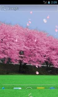 全 - 櫻花