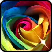 Roses flower Wallpapers
