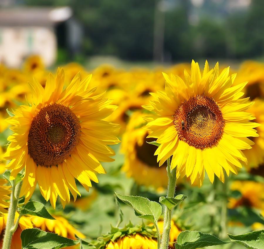 Summertime by Luigi Alloni - Uncategorized All Uncategorized