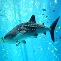 Aquarium 3D Live Wallpapr Free icon