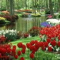 Butterfly Zen Garden LWP icon