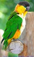 Screenshot of Birds. Animals Puzzles