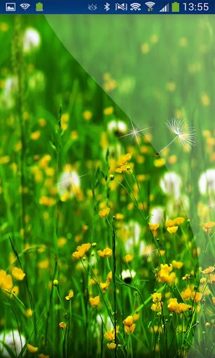Dandelion Little Flowers HD