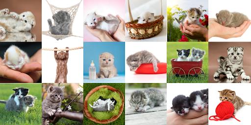 Baby Kitten HD Live wallpaper