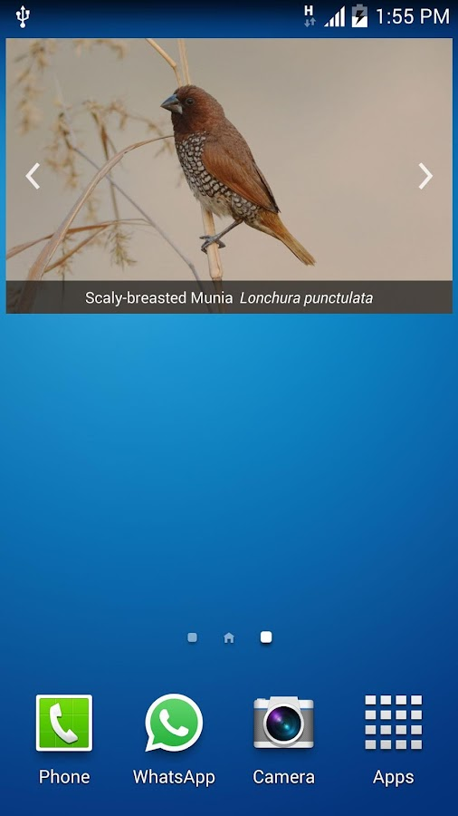 Bird Find- screenshot