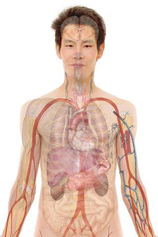 人体解剖学和生理学