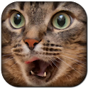 Funny Cat Sounds icon