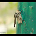 Robber fly and Moth