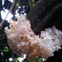 Snow fungus