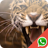 Animal Wallpapers for WhatsApp