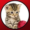 Babies love cats icon
