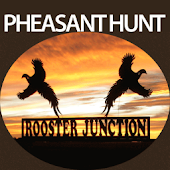 Pheasant Hunt Rooster Junction