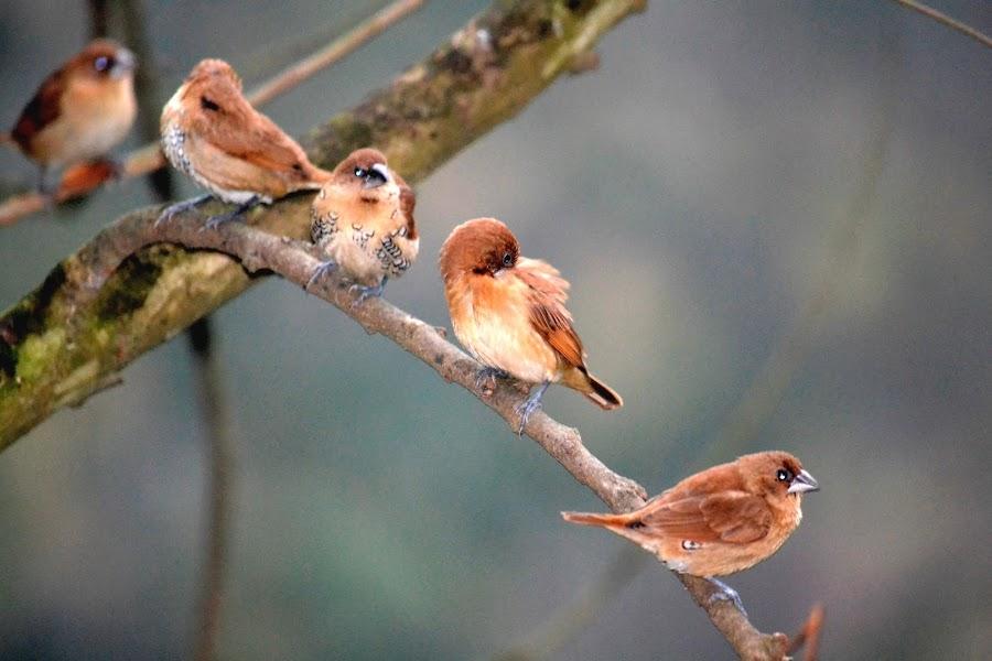by Arun Pathak - Animals Birds