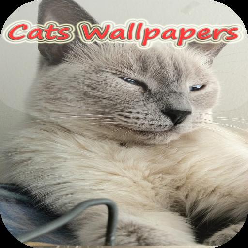 Galaxy tab Cat live Wallpapers 個人化 App LOGO-APP試玩
