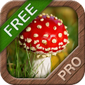 Mushrooms FREE logo