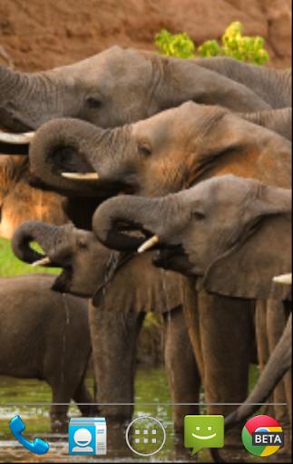 【免費個人化App】大象动态壁纸-APP點子
