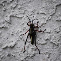 Backyard Bugs of Pennsylvania