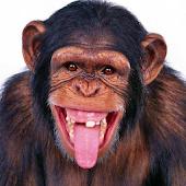 猴子動態壁紙