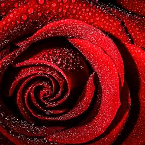 by Ian McGuirk - Flowers Single Flower