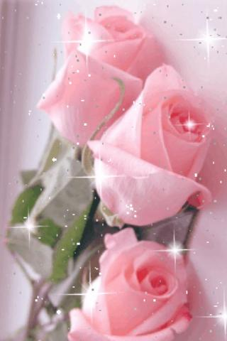 pretty pink roses live wallpap  android apps on google play, Beautiful flower