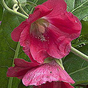 by Kathelijn Vlaemynck - Flowers Flowers in the Wild