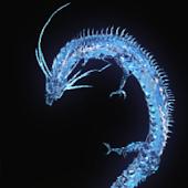 Dragon Star&Blue
