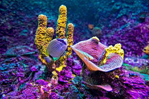 Playa-del-Carmen-Xcaret-Aquarium - One of the reefs in the Aquarium at Xcaret, south of Cancun.
