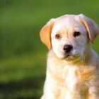 导盲犬拼图 icon