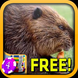 Beaver slots