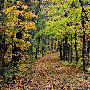 trail fall itasca sp 2014_4837.jpg