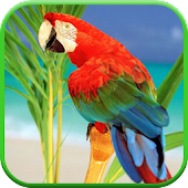Parrots From Rio Wallpaper