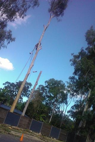 A J Tree Services