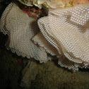 Nudibranch Spore Ribbon