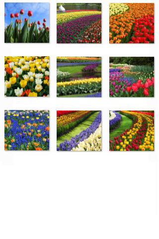 Free Flowers Collection- screenshot