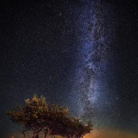 Trees under the stars by Jörgen Tannerstedt - Landscapes Starscapes ( alvar plains, stars, nightscape, öland, milky way, galaxy )