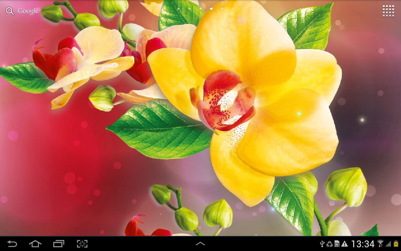 Orchids Wallpaper - screenshot