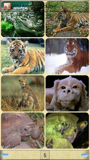 野生動物圖片