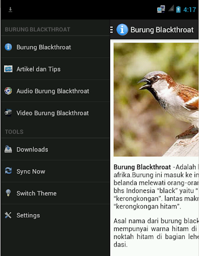 Burung Blackthroat