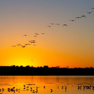 Sunset Wings.jpg
