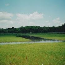 Salt Marsh Dieback/Restoration - New England