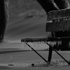 Hard times by Mario Monast - Black & White Objects & Still Life ( park, night photography, black and white, still life, park bench, night, still, objects )