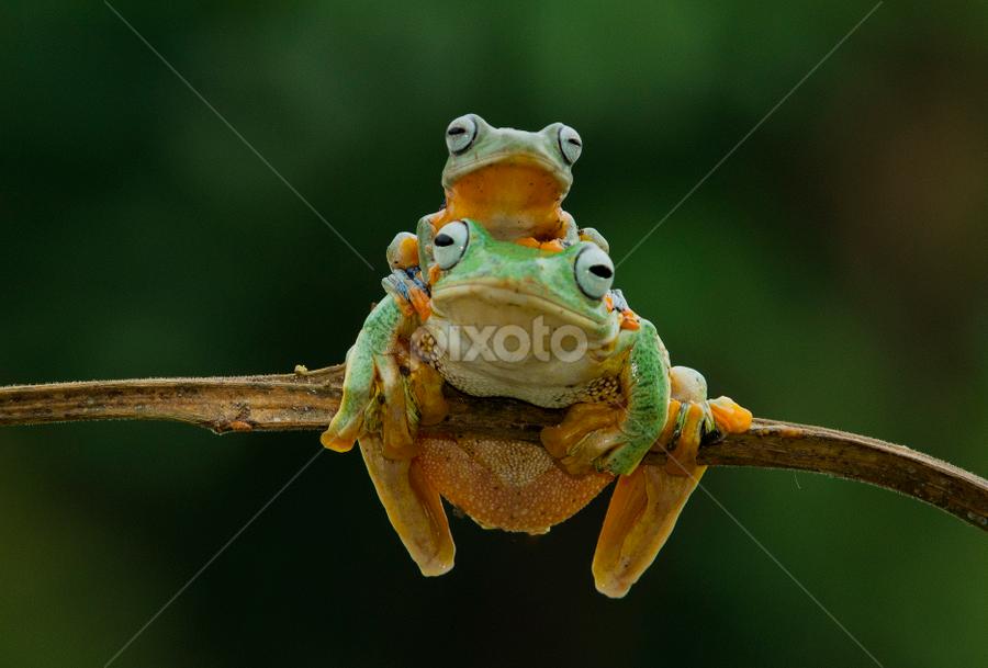 Mom and Son.. by Ubayoedin As Syam - Animals Amphibians