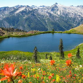 Luella Lake Wildflowers by Adam Collins - Landscapes Mountains & Hills ( backpacking, alpine lake, wildflowers, trinity alps, mountains, camping, luella lake, indian paintbrush )